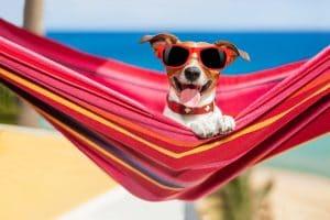 degenia Sonder Haftpflichtrisiken Hundehaftpflicht